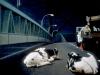 Ambassador Bridge: Nightworks, 1989